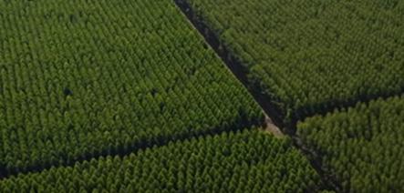 Selo FSC de Manejo Florestal